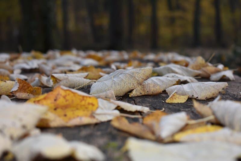Otoño y hojas en la tabla foto de archivo
