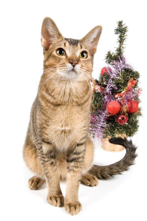 oto nowy rok kot obrazy royalty free