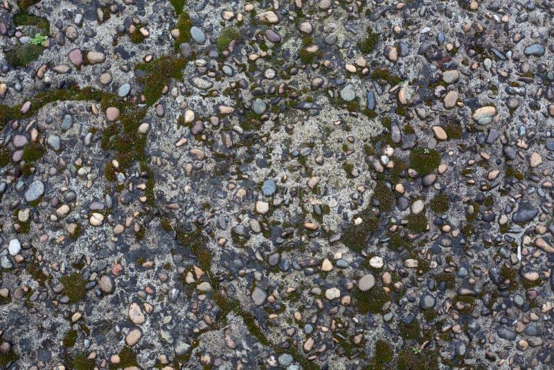 Otoczak intarsja w betonie z mech obraz stock