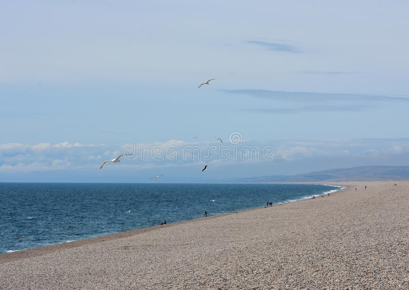Otoczak plażowa scena z seagulls fotografia royalty free