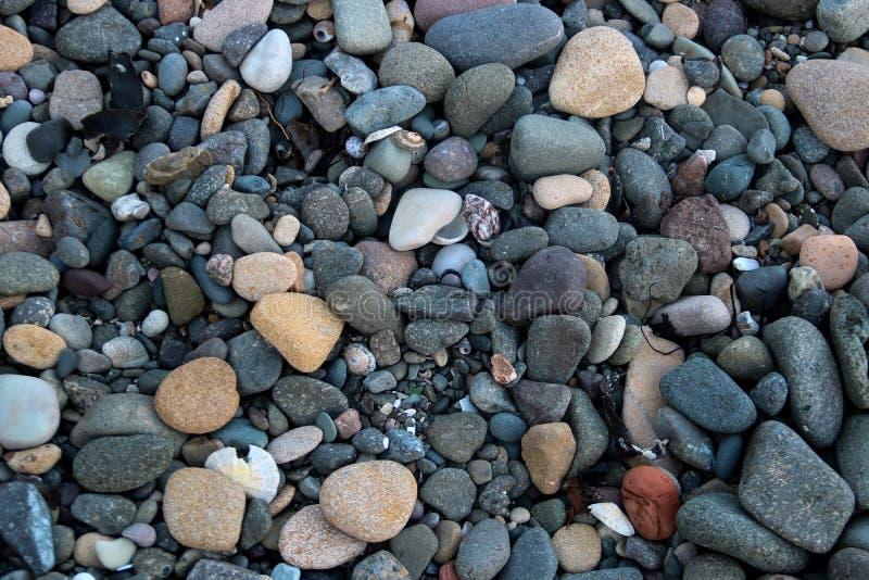 Otoczaki i Denne skorupy na gont plaży fotografia royalty free