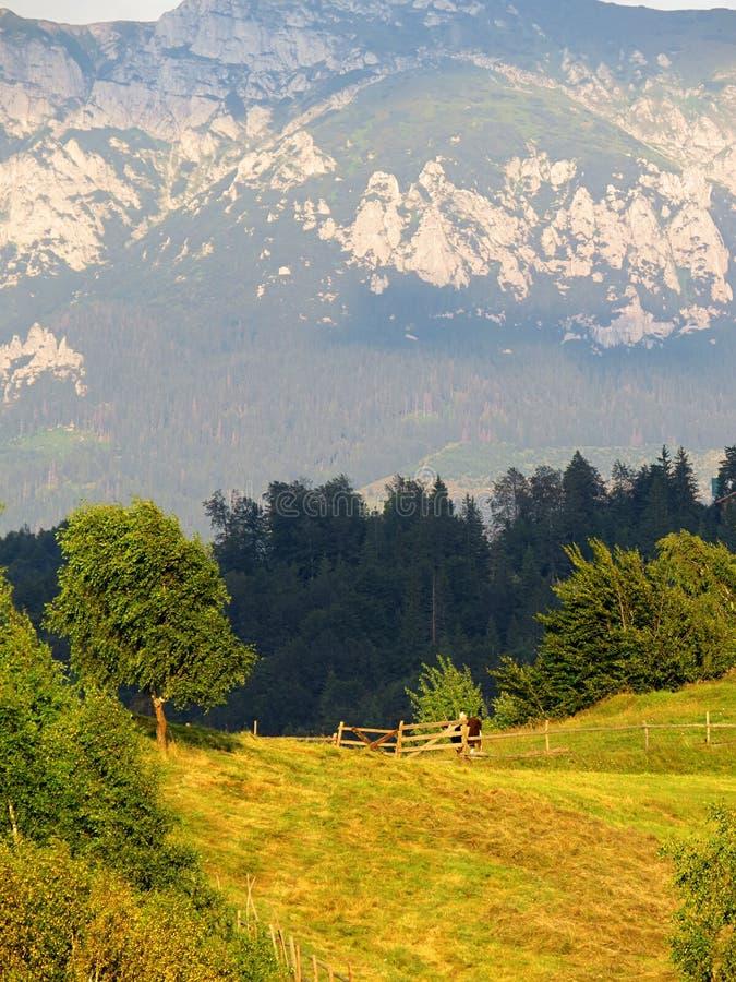 Otręby - Moeciu Rumunia fotografia stock