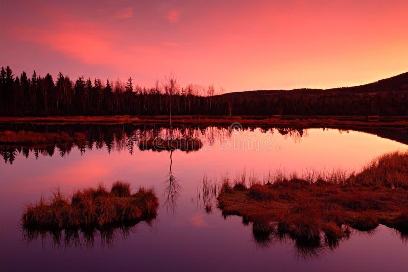 Otta för soluppgång, skymning med rosa och violett ljus, vattensjö i skogträsket, med gräsöar, prydlig för royaltyfri foto