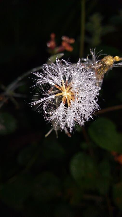 Otta för vintersnöblomma fotografering för bildbyråer