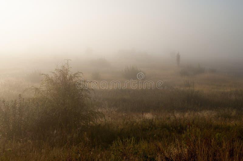 Otta i fältet med höstdimma och droppar av vatten i luften Toner av brunt Ingenting kunde se långt borta Beauti arkivfoto