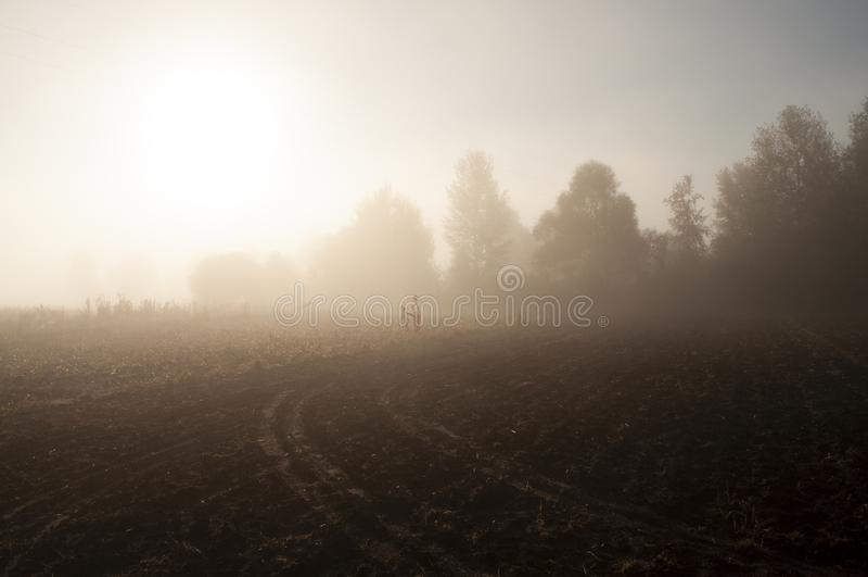 Otta i fältet med höstdimma och droppar av vatten i luften Toner av brunt Ingenting kunde se långt borta Beauti royaltyfri bild
