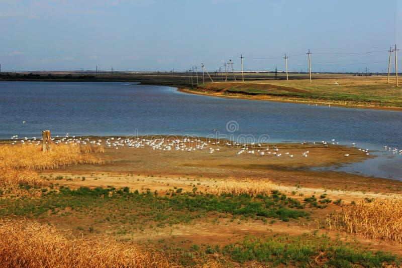 Otta många havsfiskmåsar, ett näs Foto från den Crimean bron royaltyfri fotografi