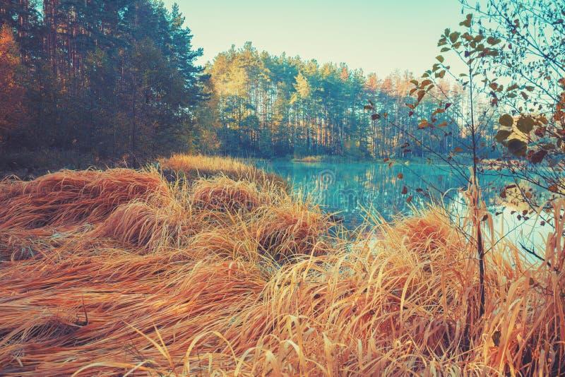 Otta soluppgång över skogsjön fotografering för bildbyråer