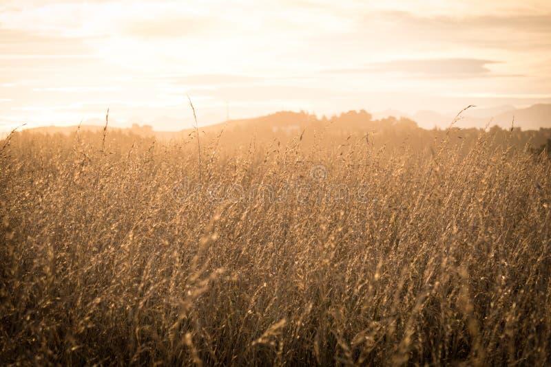 Ottabakgrundsbild av risskördar arkivfoton