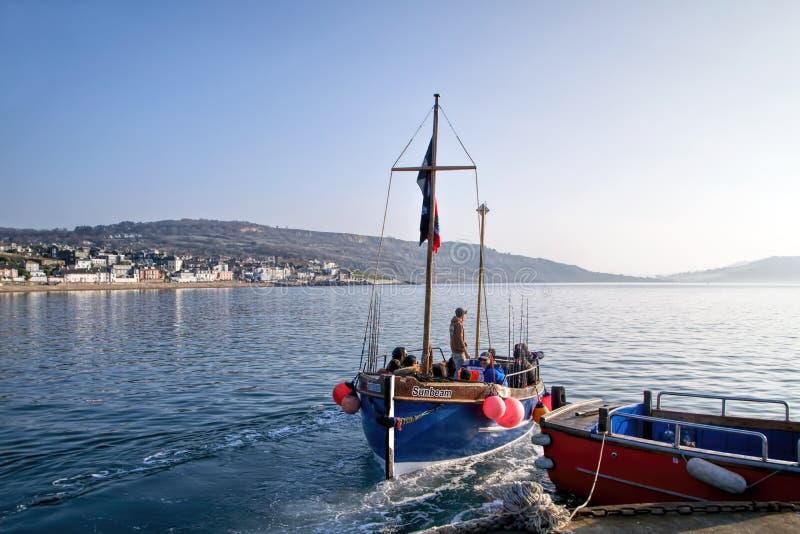 Ottafiske - Lyme Regis royaltyfri fotografi