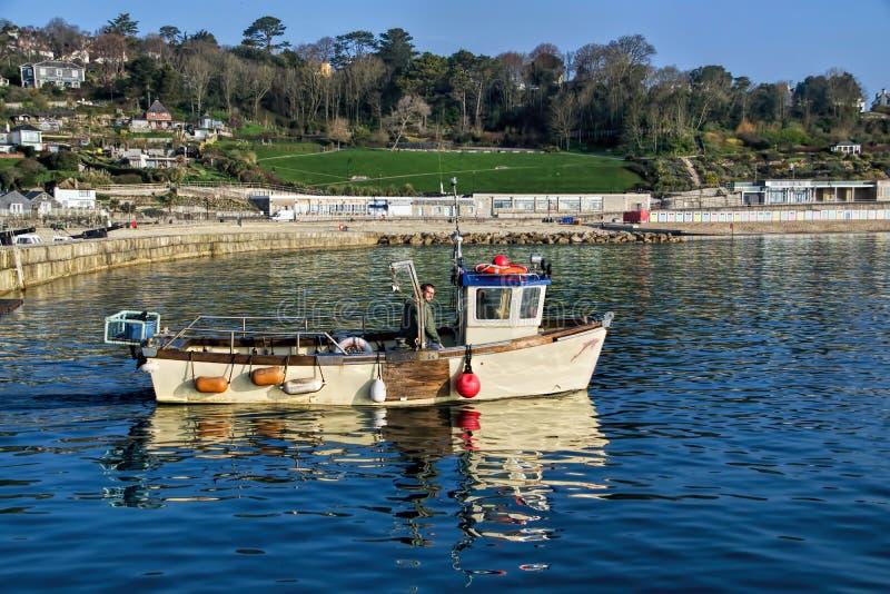 Ottafiske - Lyme Regis royaltyfria foton