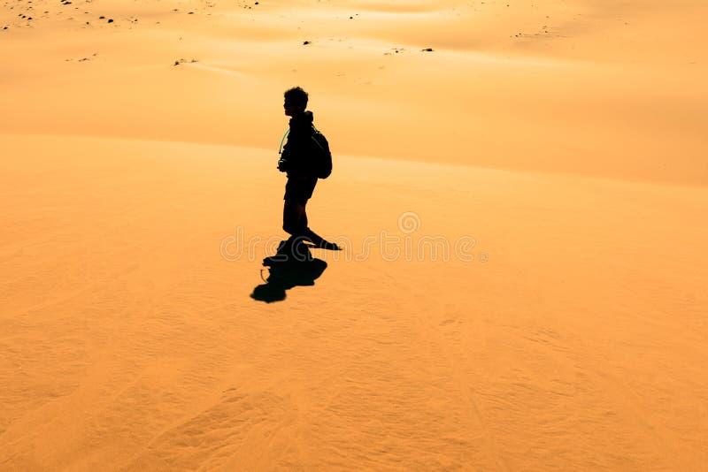 Ottaklättrare på sanddyn nära Sossusvlei, Namibia fotografering för bildbyråer