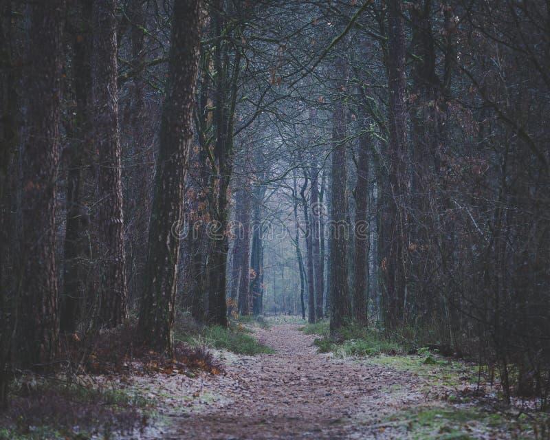 Ottan går på mörker för skogbana framåt royaltyfri bild
