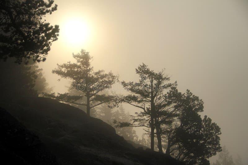 Ottasolavbrott till och med tjock dimma fotografering för bildbyråer