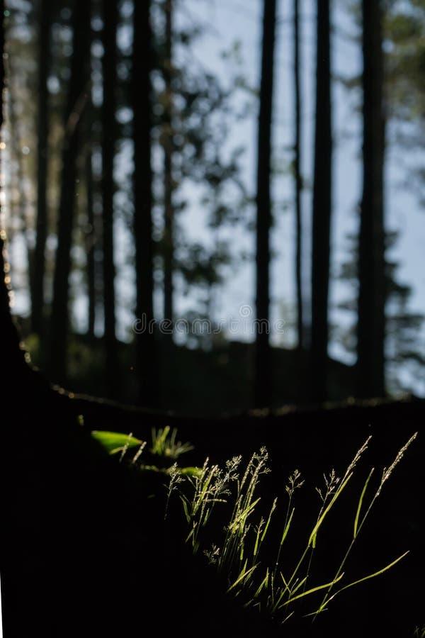 Ottasolljus i skog royaltyfri foto