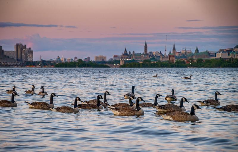 Ottawa, Canada in sunset. From the Bates Island royalty free stock photos
