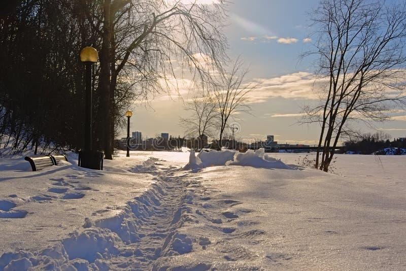 Ottawa flodbana som täckas i snö med kala trädkonturer mot birghtsolljus fotografering för bildbyråer