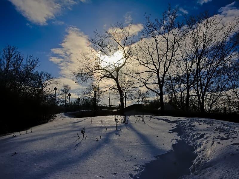 Ottawa flodbana som täckas i snö med kala trädkonturer mot birghtsolljus royaltyfri bild