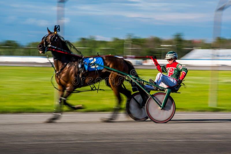 Ottawa hästkapplöpning royaltyfria bilder