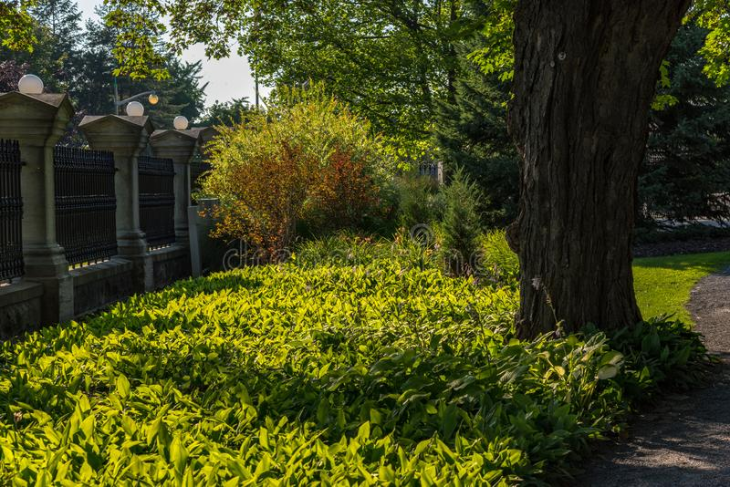 Ottawa: Regulatorer parkerar arkivbilder