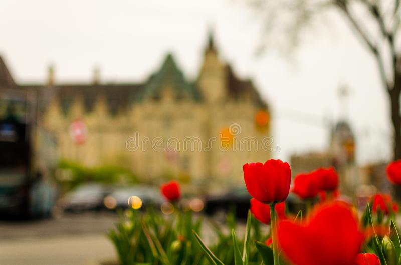 Ottawa summer tulip festival stock photography