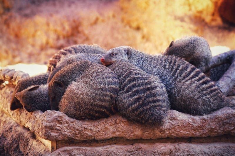 otter stockbilder