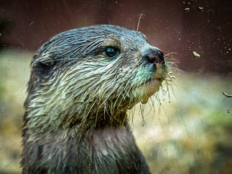 otter stock foto