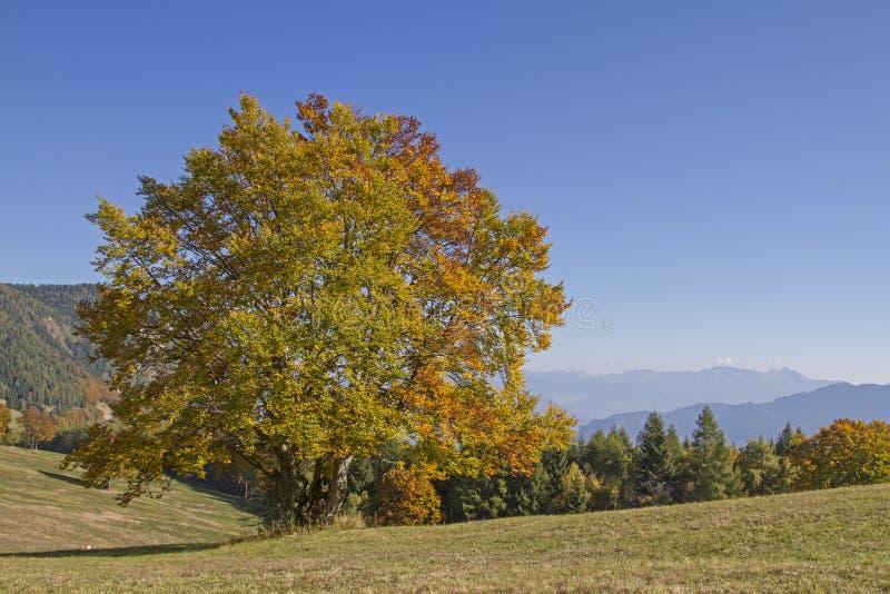 Ottobre dorato nelle montagne di Monte Bondone immagini stock libere da diritti