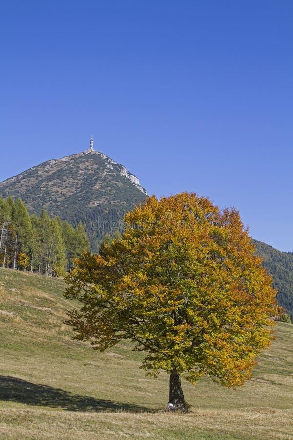 Ottobre dorato nelle montagne di Monte Bondone fotografia stock libera da diritti