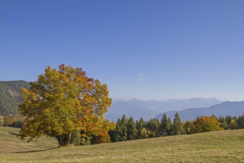 Ottobre dorato nelle montagne di Monte Bondone immagini stock