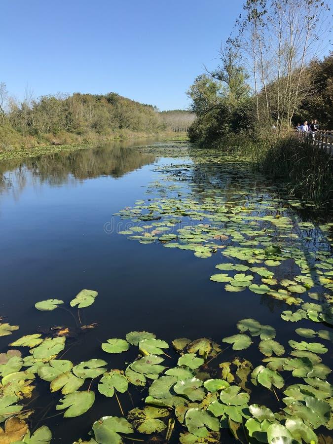 OTTOBRE 2018, foresta della palude d'acqua dolce in secondo luogo più grande della Turchia: Acarlar in Sakarya, Turchia fotografia stock