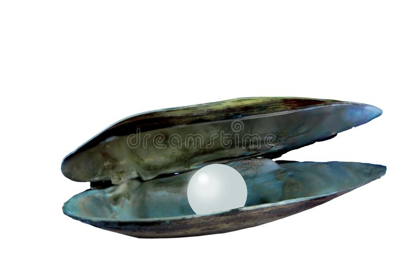 Otwarta rzeczna perłowiec skorupa obrazy royalty free