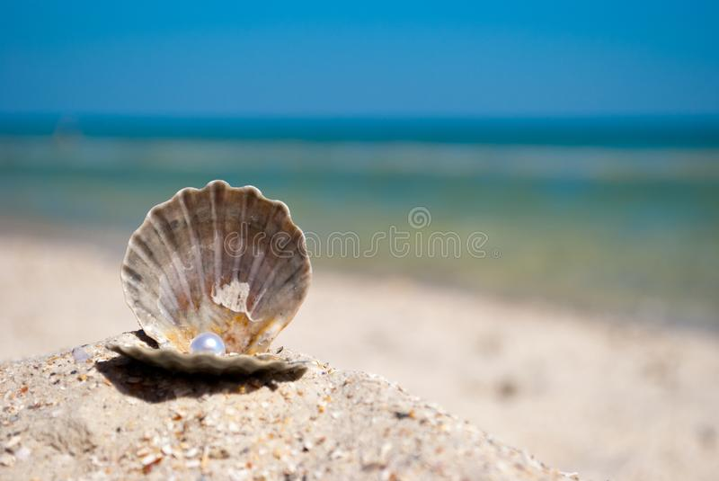 Otwarta szarości skorupa z perłą kłama na piasku na tle błękitny morza i niebieskiego nieba wakacje fotografia stock