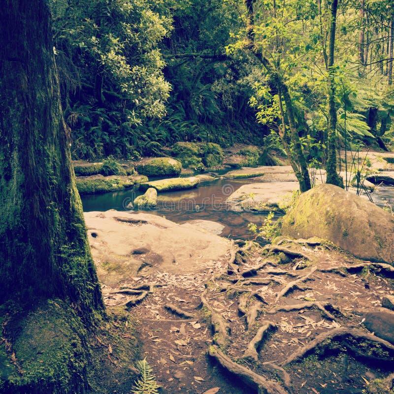 Otways国立公园 免版税库存照片