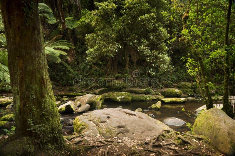 Otways Nationaal Park royalty-vrije stock foto