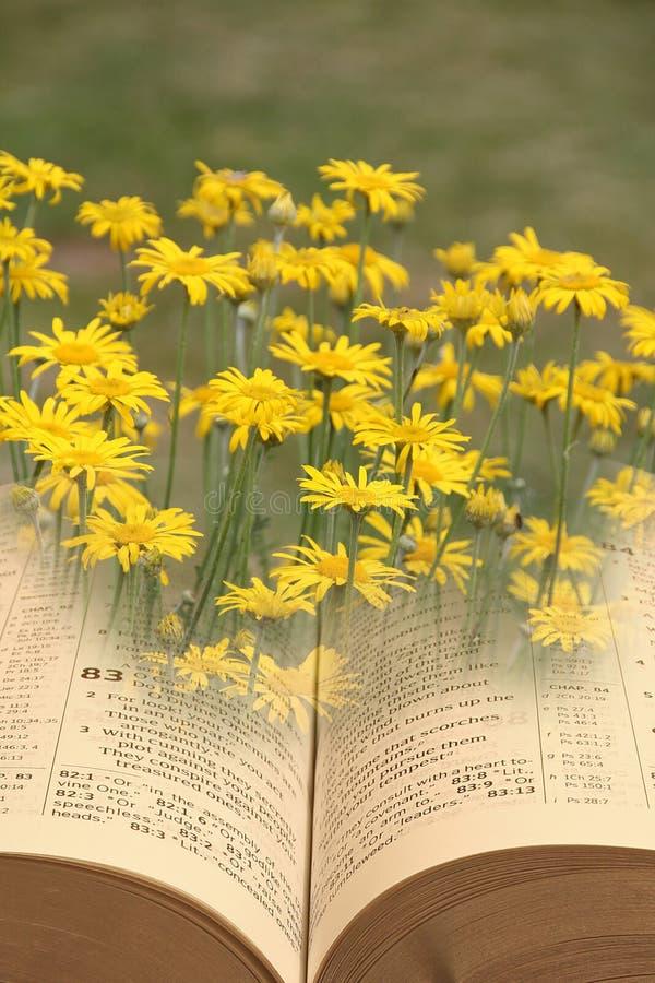 Otwiera biblia pokoju duchowego królestwo bóg obraz stock