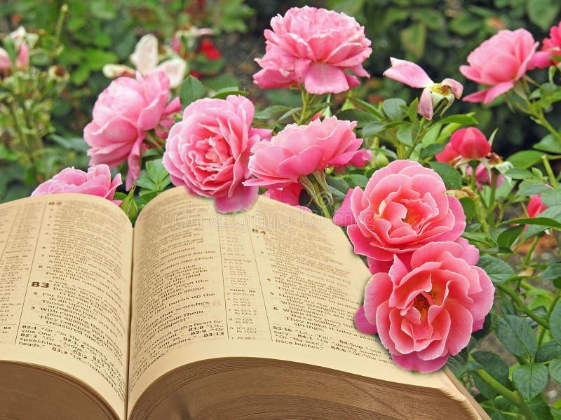 Otwiera biblia pokoju duchowego królestwo bóg obrazy stock