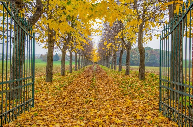 Otwiera bramę z ulistnieniem w Włochy w jesień czasie, trees/gate/drodze, empty/jesieni/ obrazy stock
