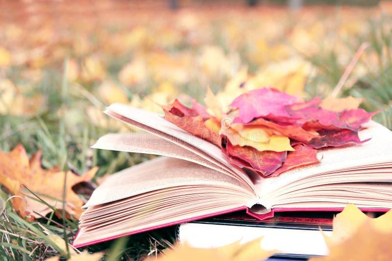 Otwiera książkę w jesień liściach Wiedza władzą jest Edukacja enlightenment Miłość zdjęcie royalty free
