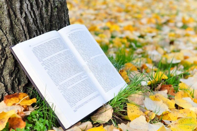Otwiera książkę w naturze obraz royalty free