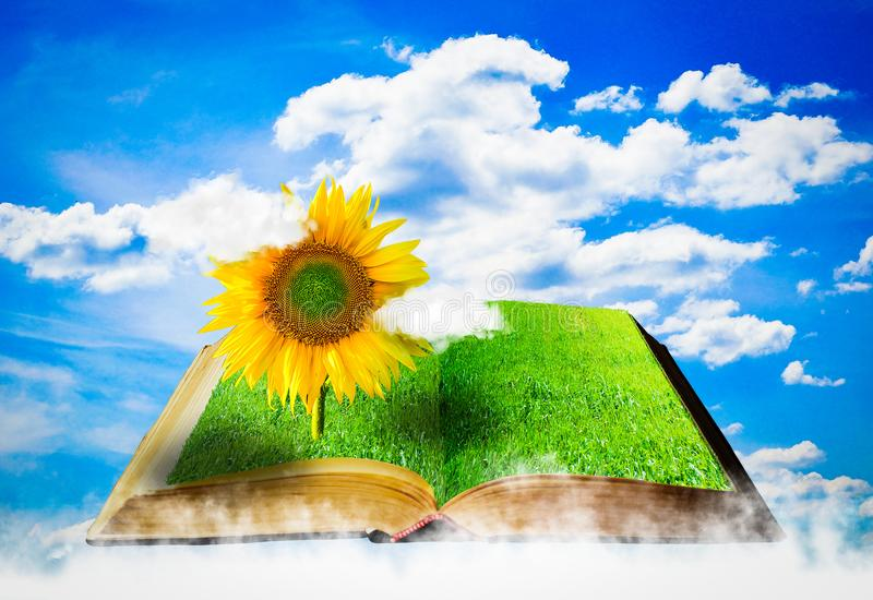 Otwiera książkę z słonecznikiem Rolniczy Pojęcie zdjęcia stock