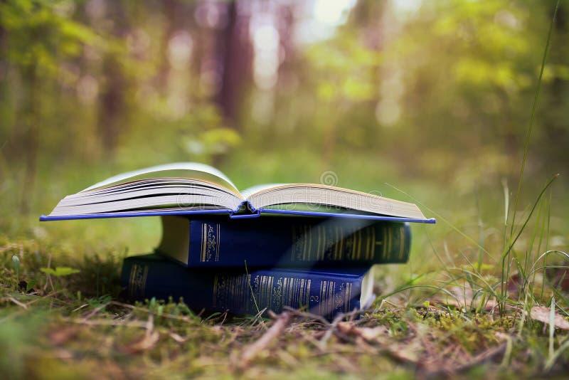 Otwiera książki plenerowe Książki w drewnach obraz stock