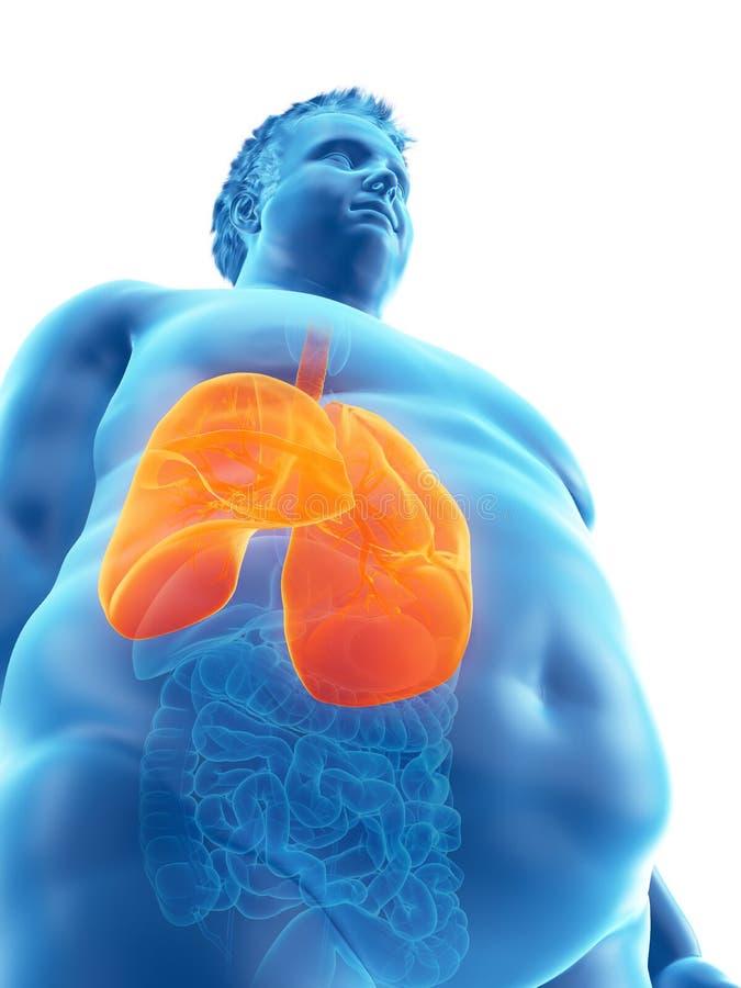 Otyły obsługuje płuca ilustracji