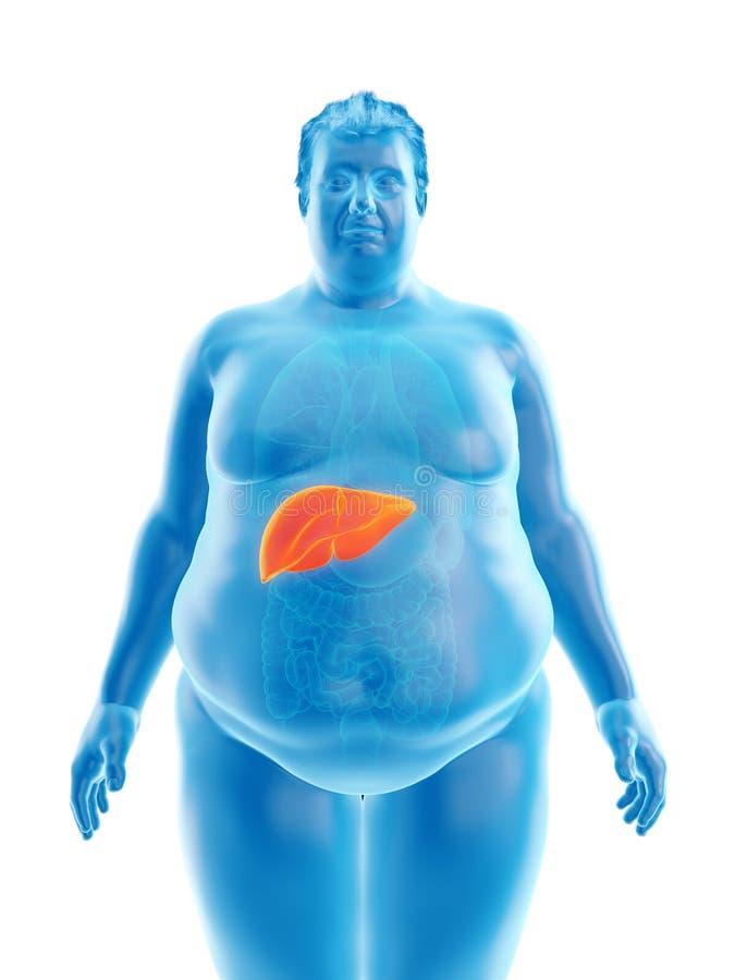 otyły obsługuje wątróbkę ilustracja wektor