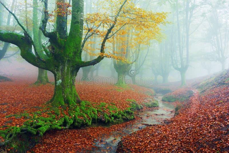 Otzarreta skog i höst med en ström arkivbild