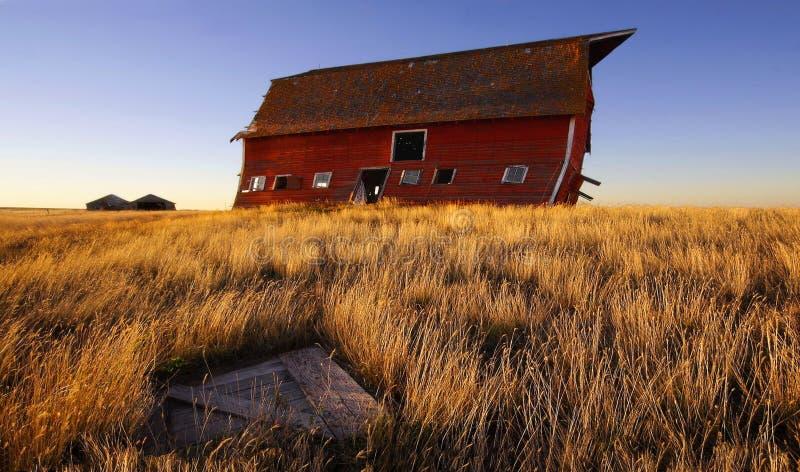 Oublié sur les prairies photo libre de droits