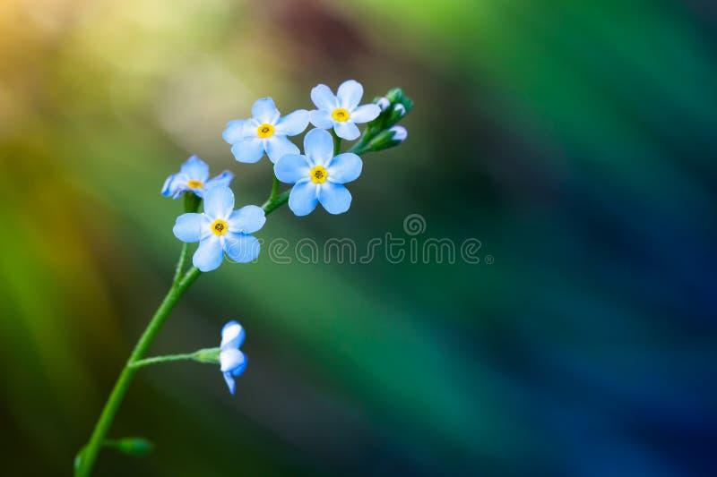 Oubliez-moi pas des fleurs au-dessus de fond brouillé image libre de droits