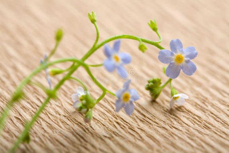 Oubliez-moi pas fleur au-dessus de papier réutilisé photo stock