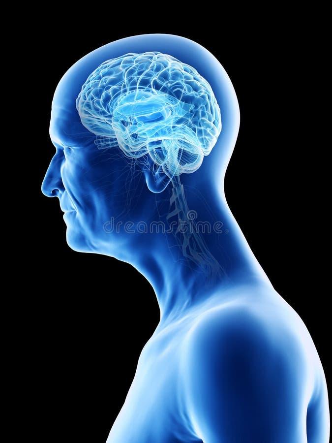 Oud bemant hersenen stock illustratie