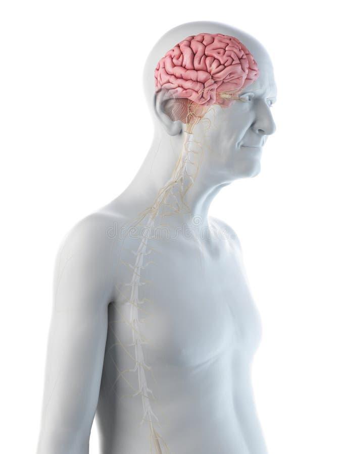 Oud bemant hersenen en zenuwen vector illustratie